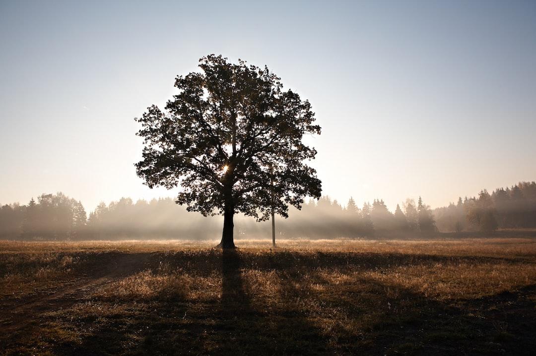 Sunrise behind a tree