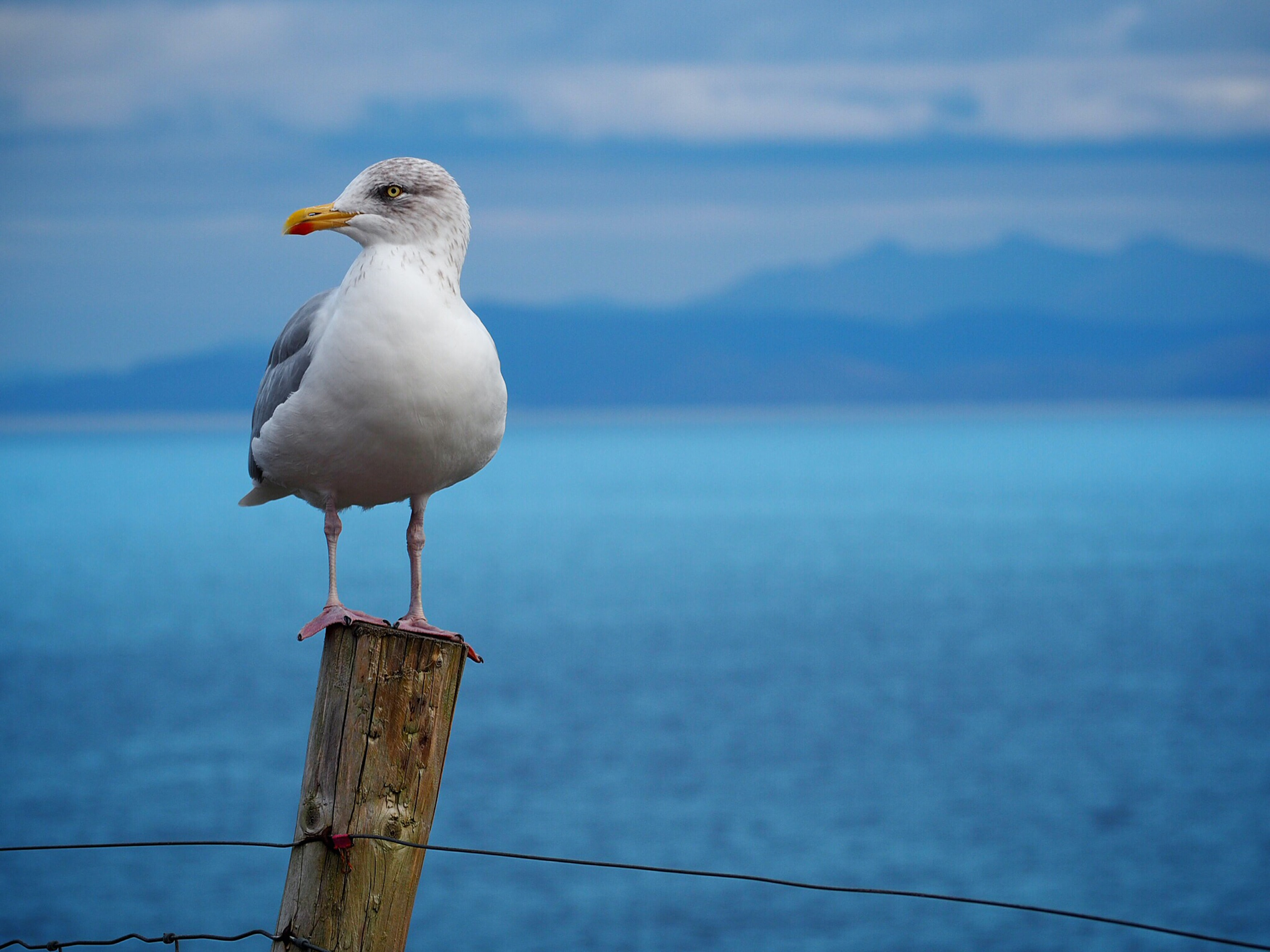white bird standing on brown pole