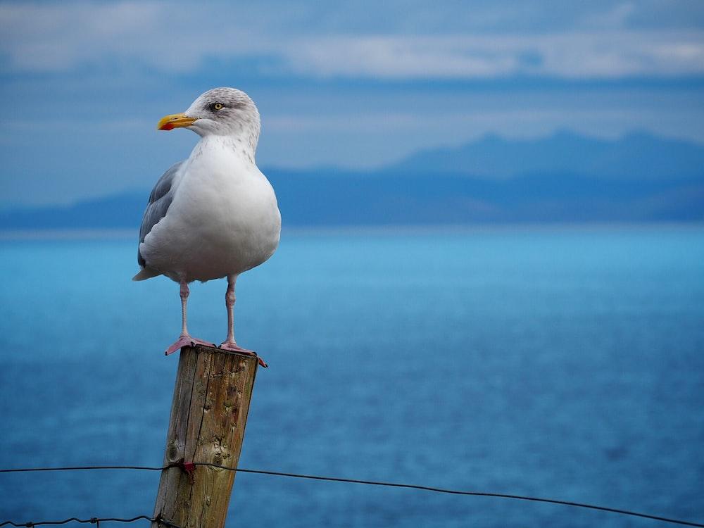 white bird standing on brown pole