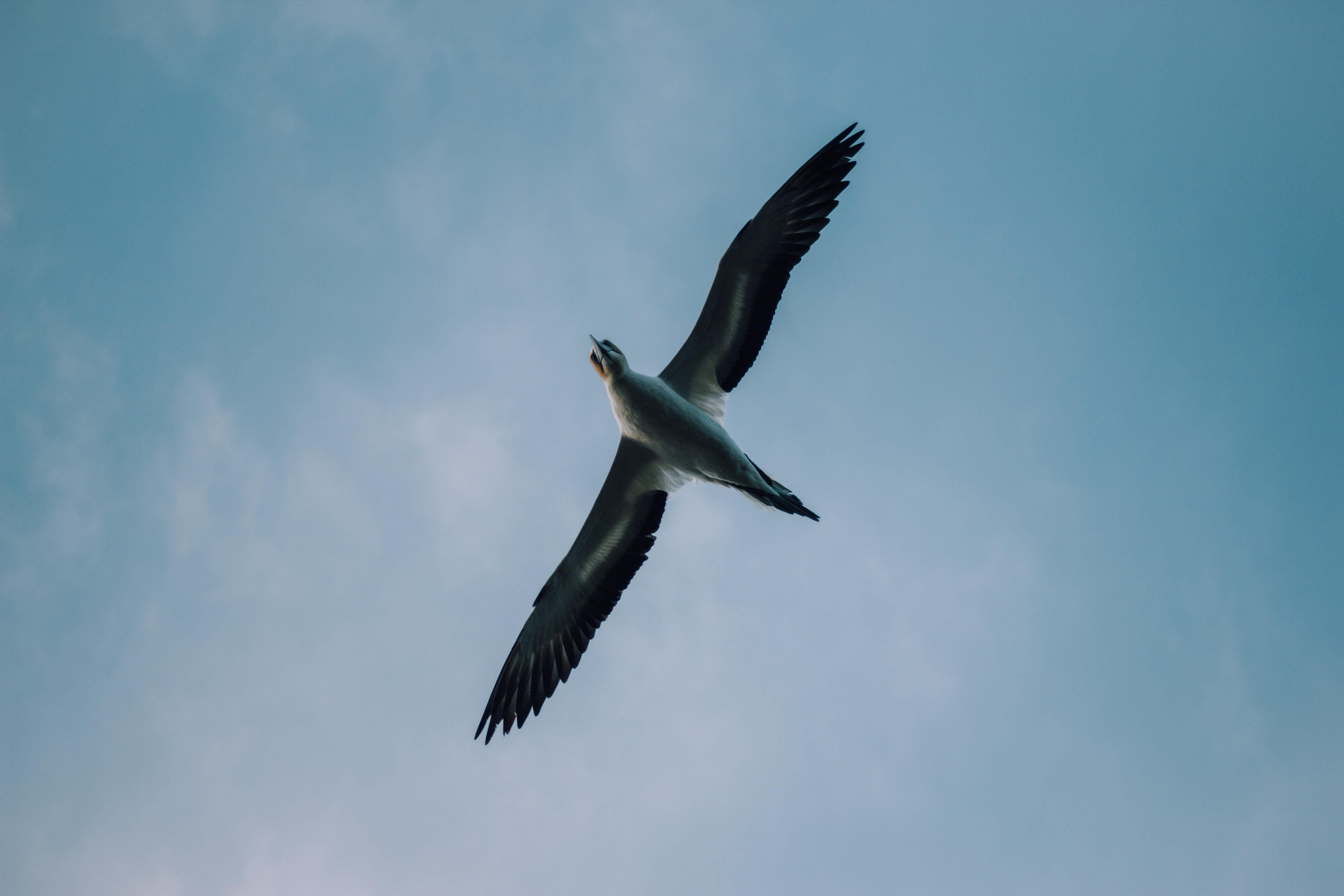 gray bird during daytime