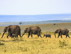 Fahrt in die Massai Mara