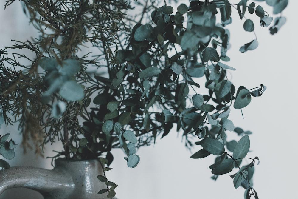 green plant on gray ceramic pot