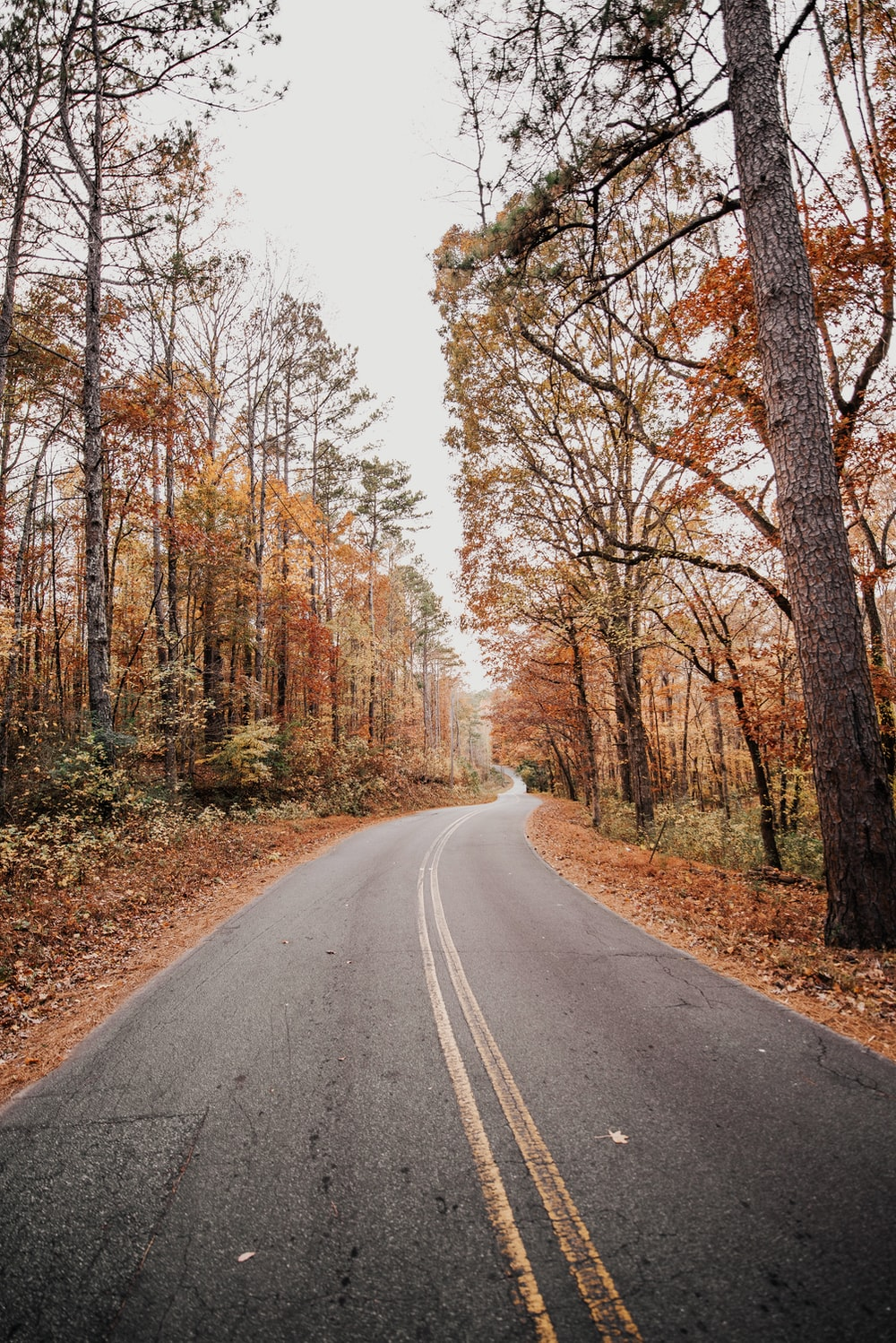 road between autumn forest