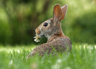 selective focus photo of brown rabbit on grasses