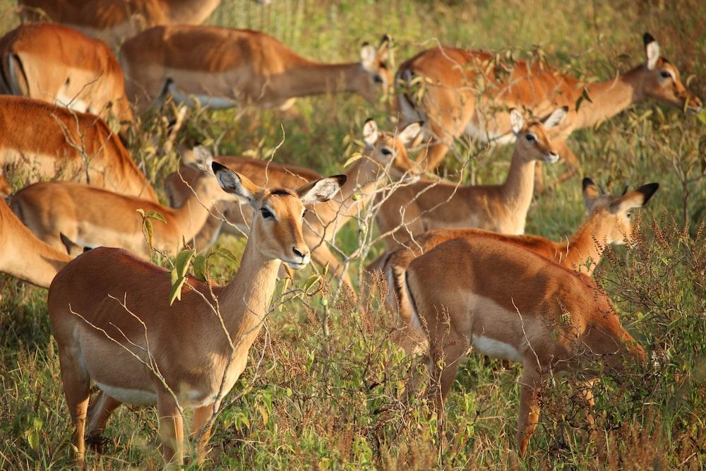 deer eating grass during daytime