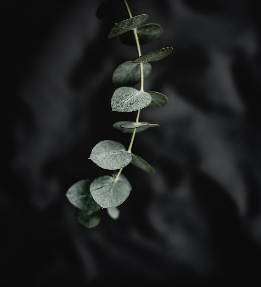selective focus photography of green leafed plant