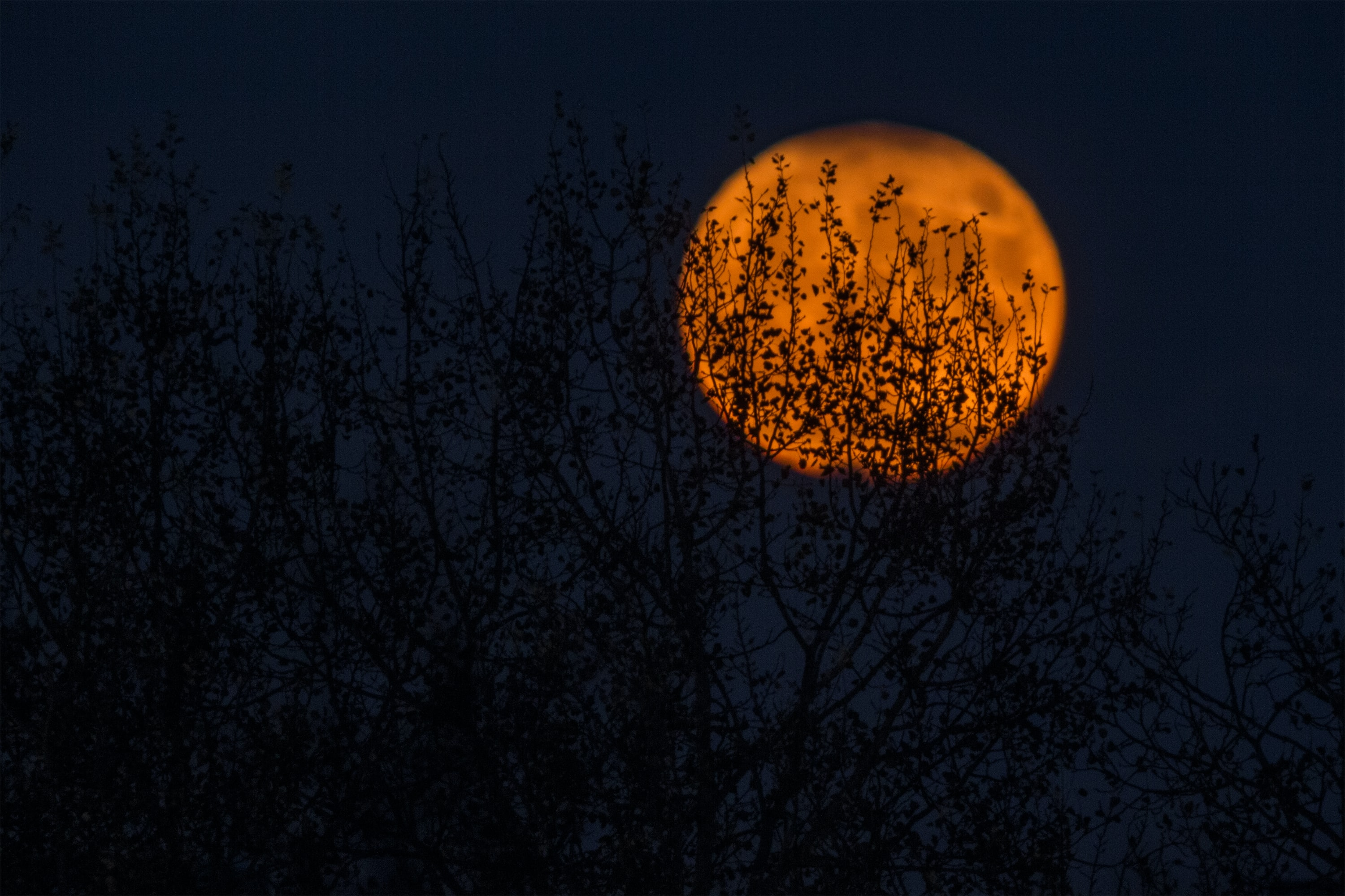 Leafy branches seen silhouetted against an orange moon over Zagreb