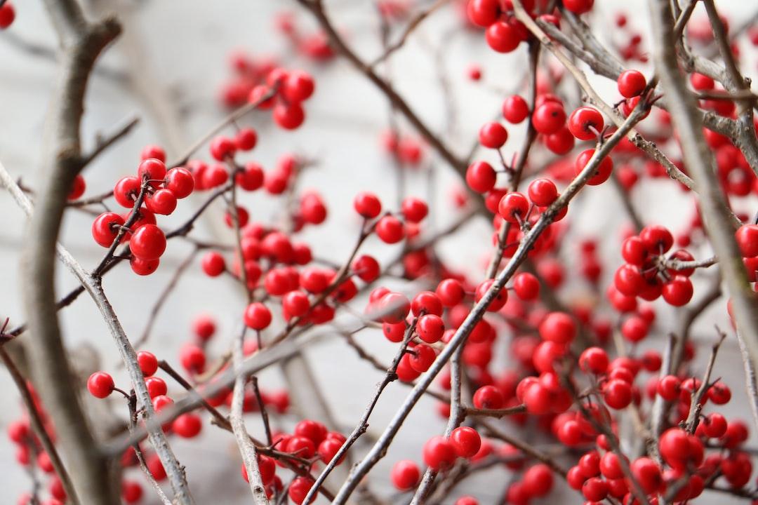 Nine Lessons and Carols 7