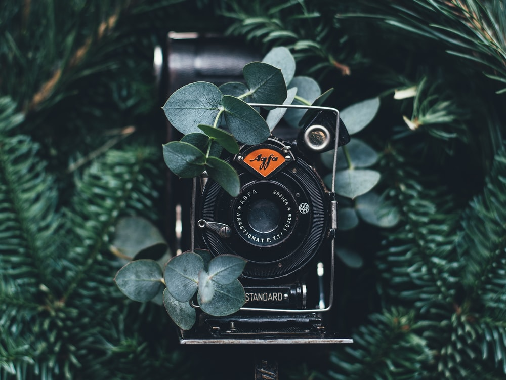 black digital camera near green leaves