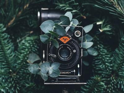 black digital camera near green leaves leafe teams background
