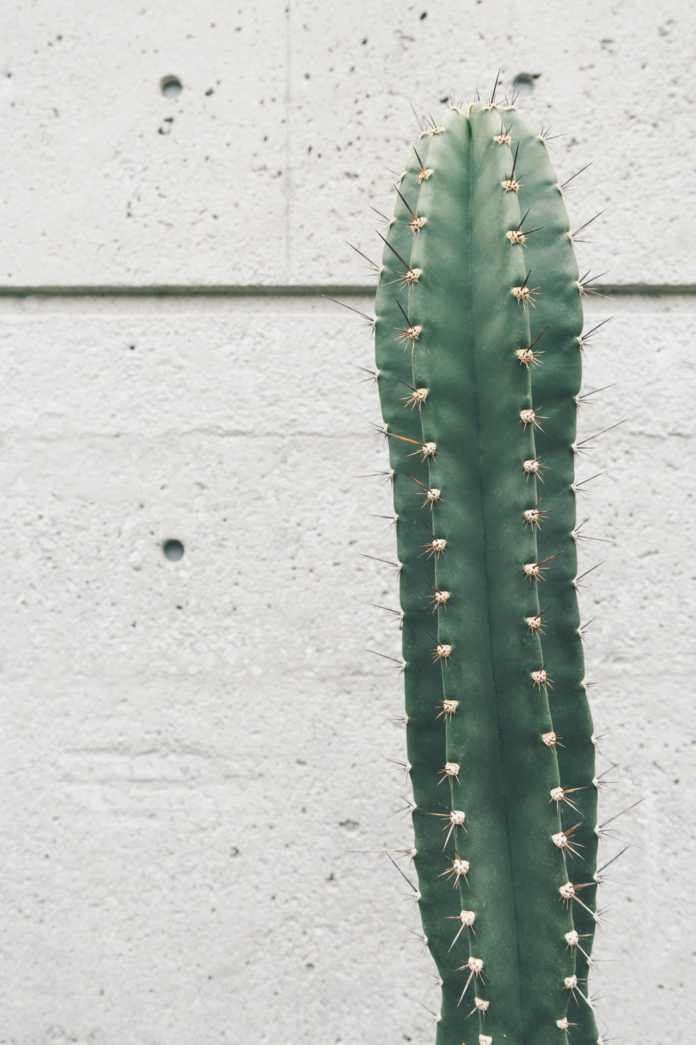 green cactus near wall
