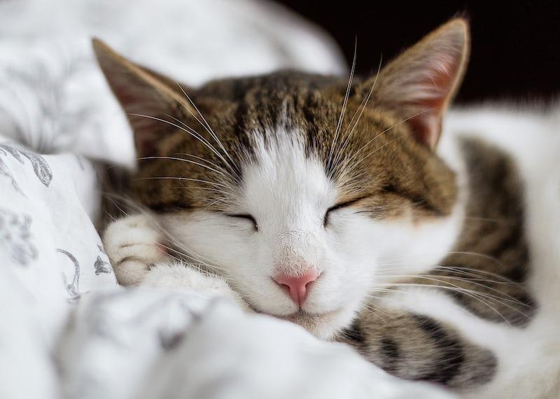 気持ちよさそうに寝ているネコ