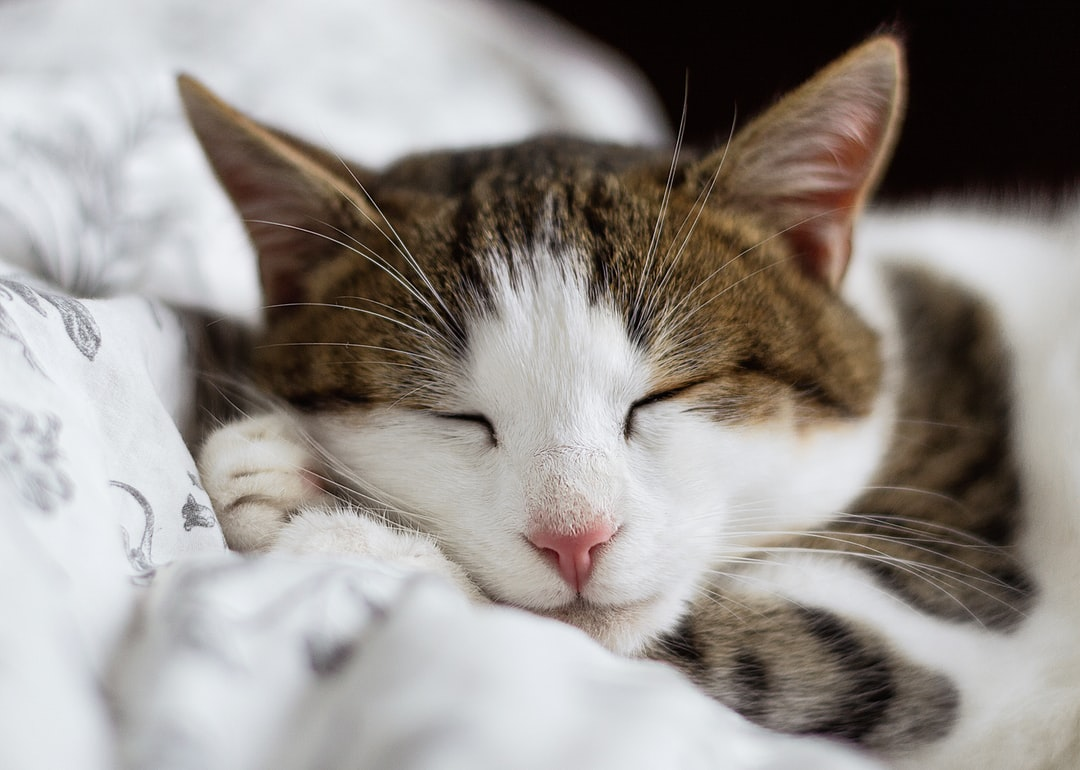 100 Sleeping Cat Pictures Download Free Images On Unsplash