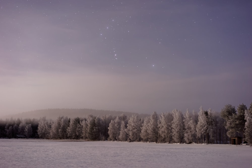 snow covered field with tress during night time