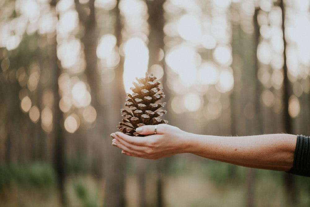 person with pine cone on hand