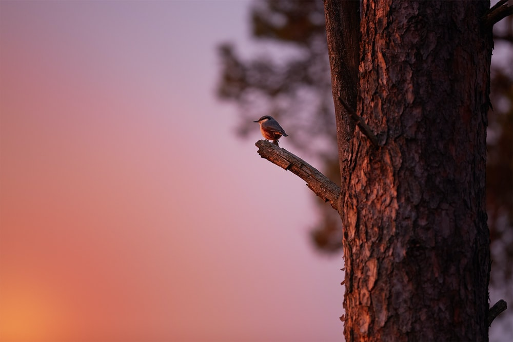 black bird perched on tree branch during golden hour