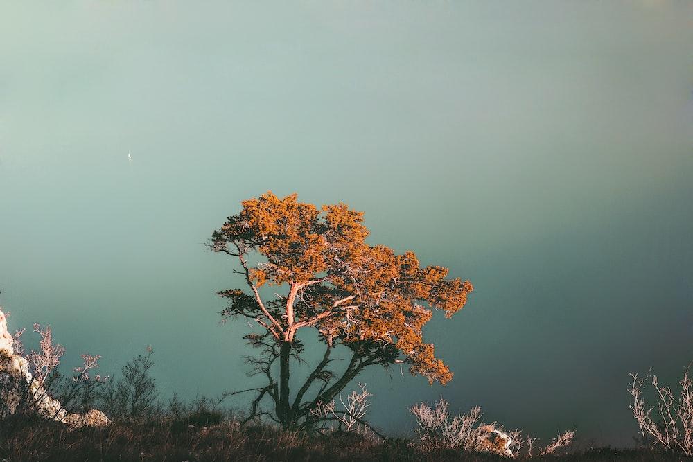 orange leaves tree
