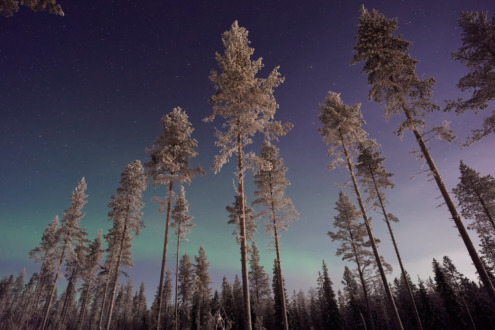 forest trees during night
