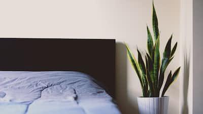 Sleep Dust  sleep stories