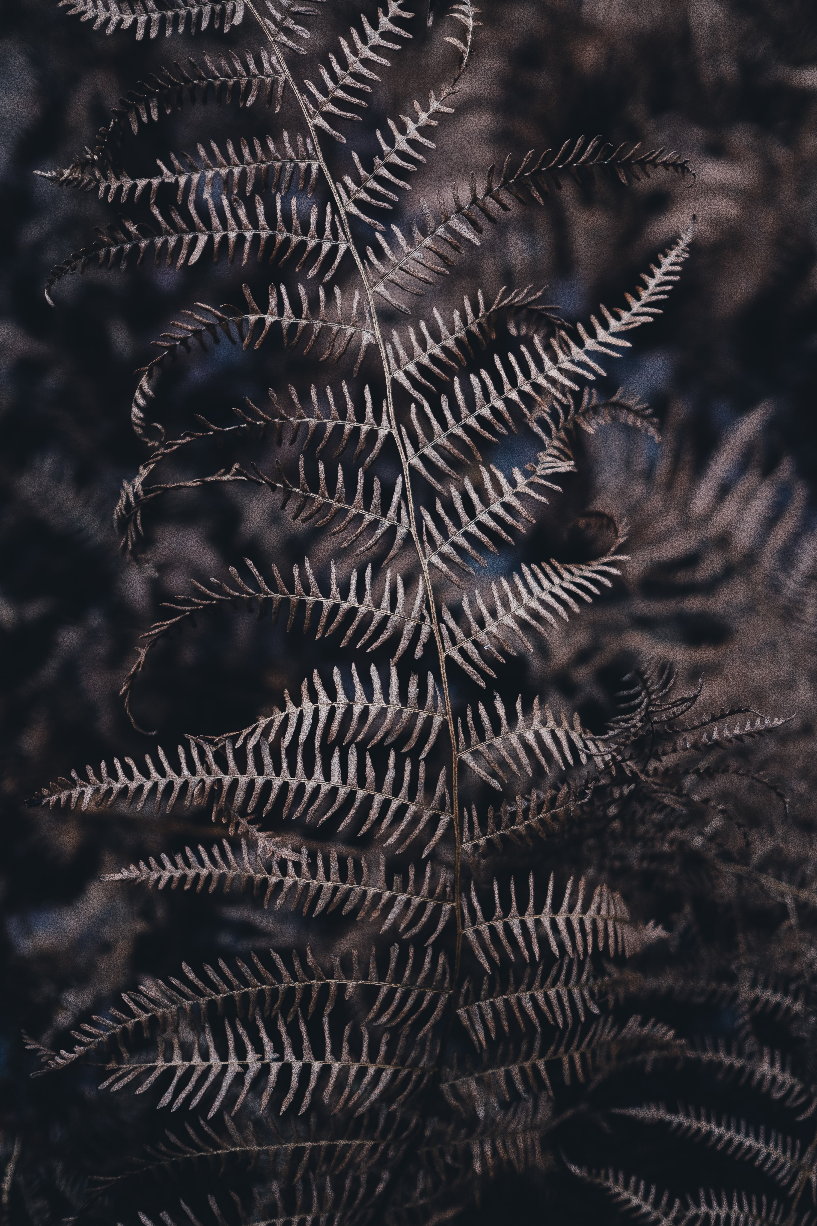 Close-up of dry fern leaves