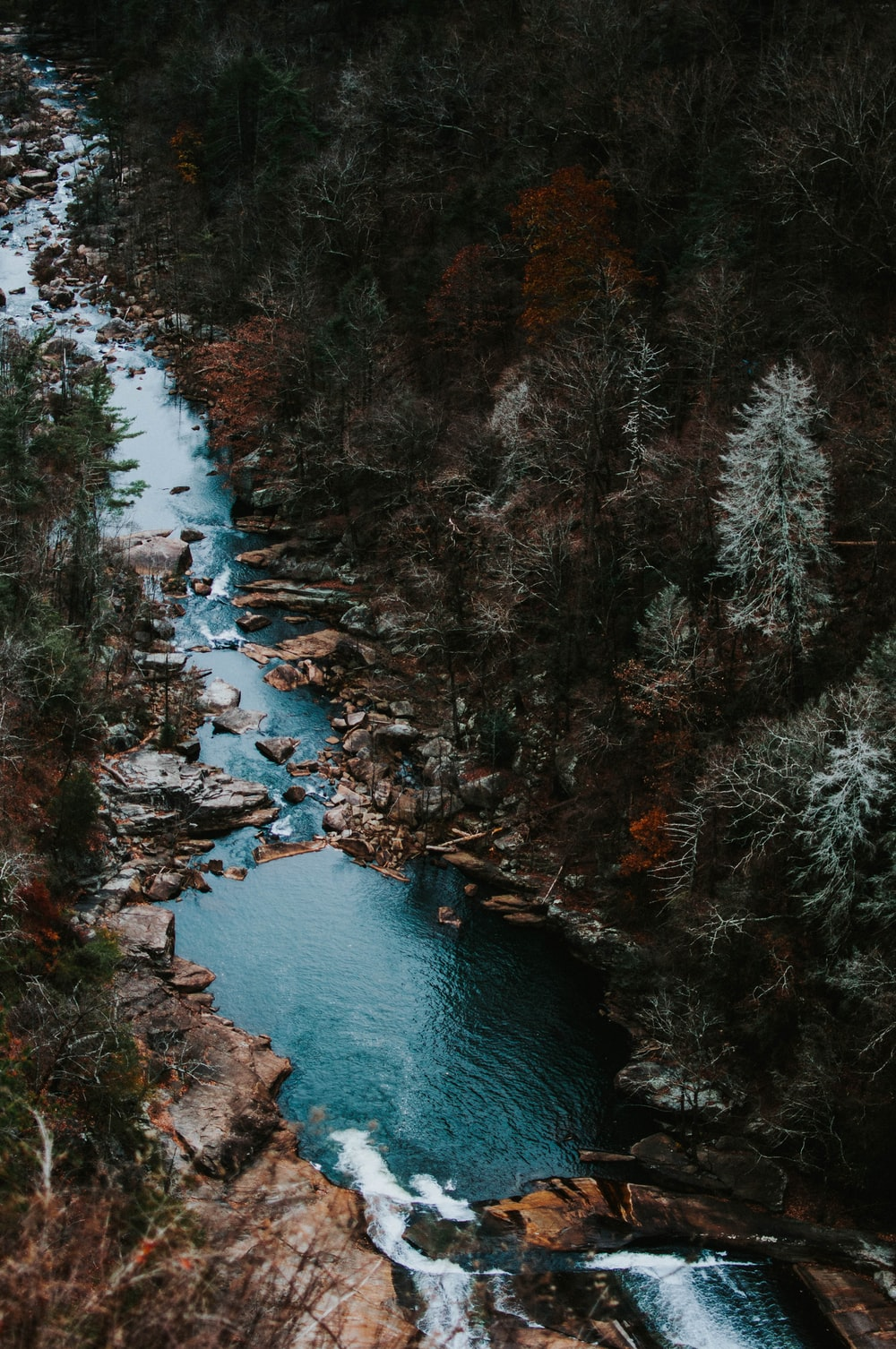 aerial photography of body of water with trees around
