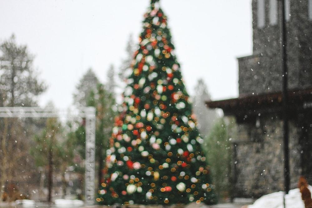 pine tree on bokeh photography