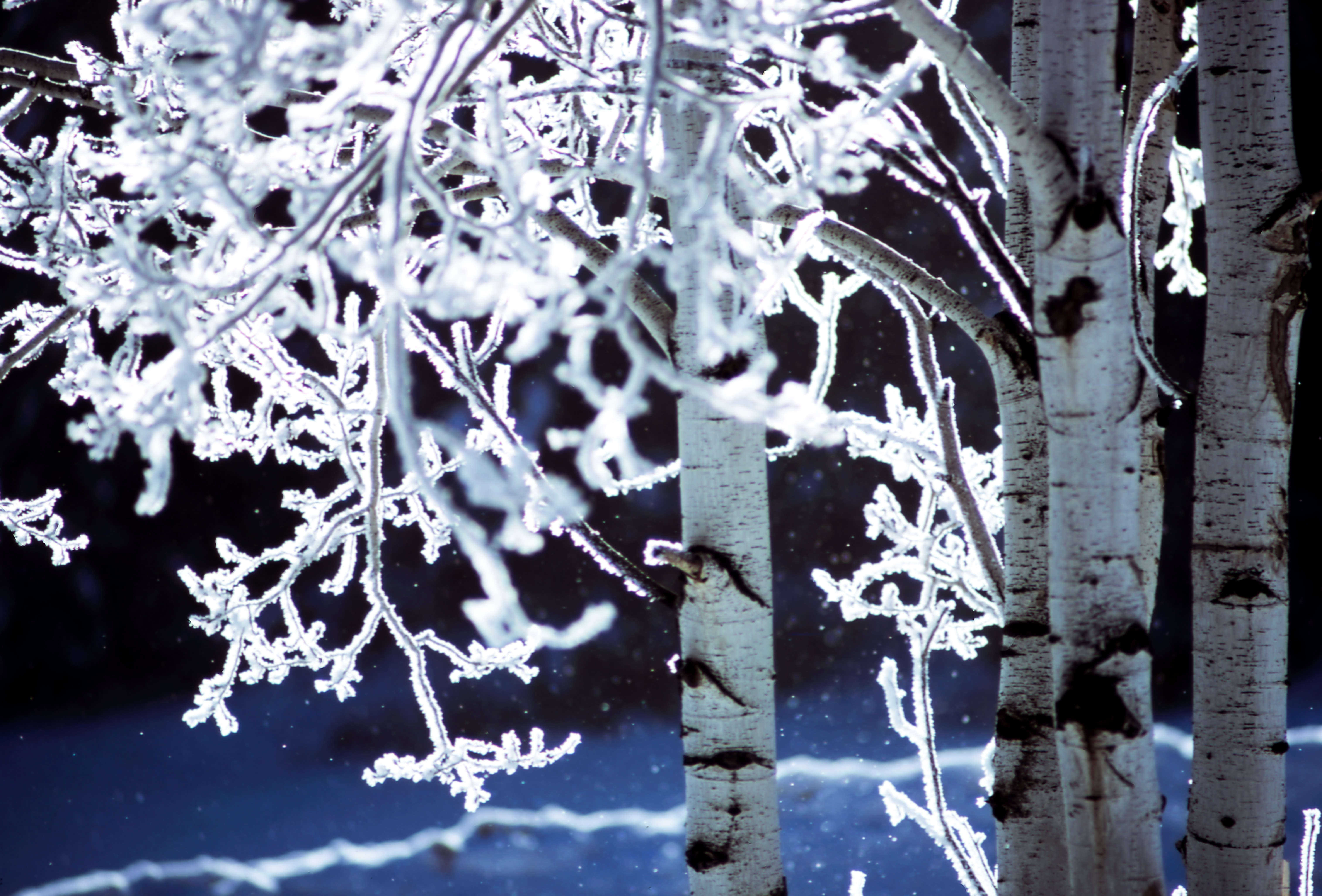 A macro shot of tree branches covered with snow and ice on a winter night