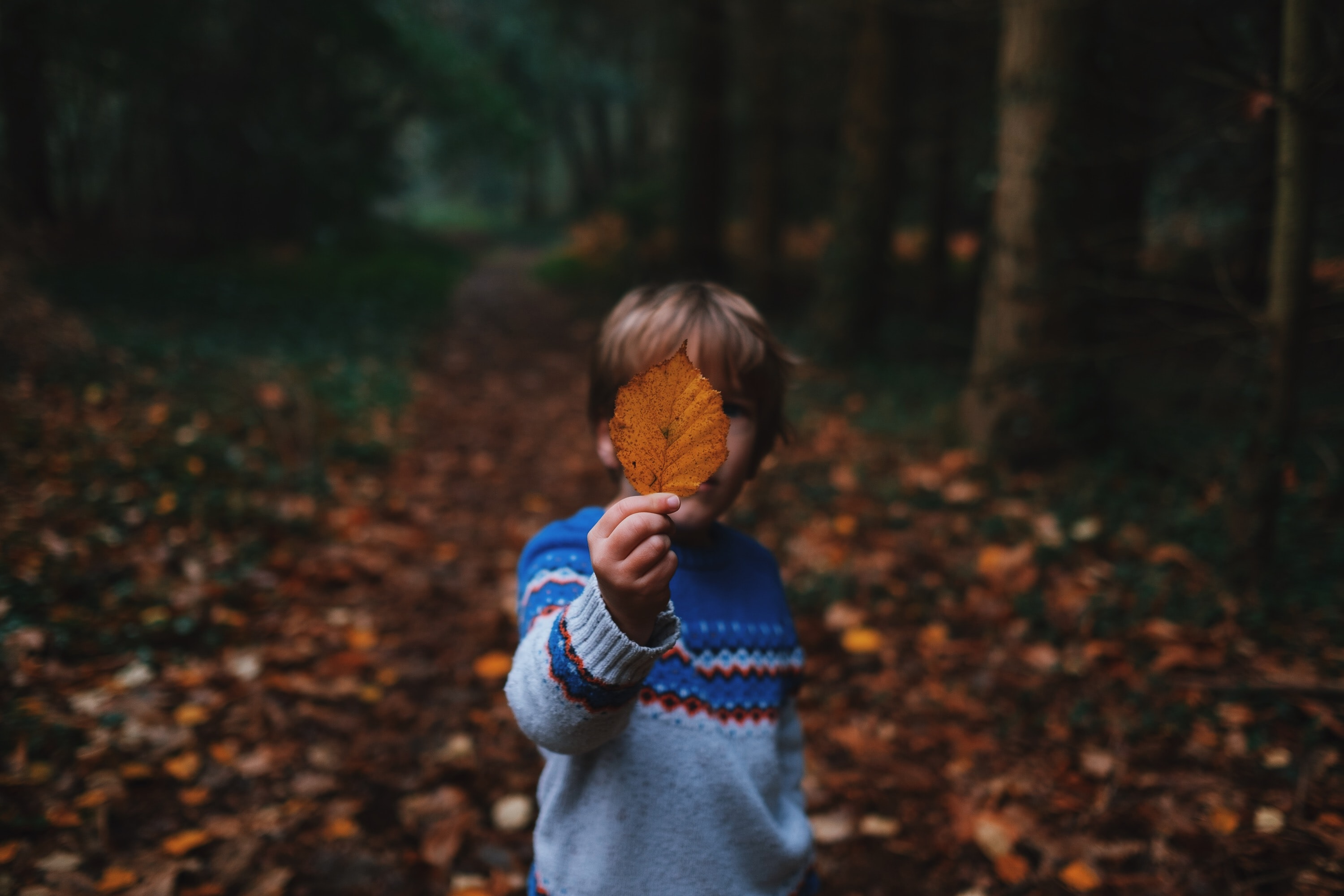A boy is holding a yellow leaf in front of his face in a forest.