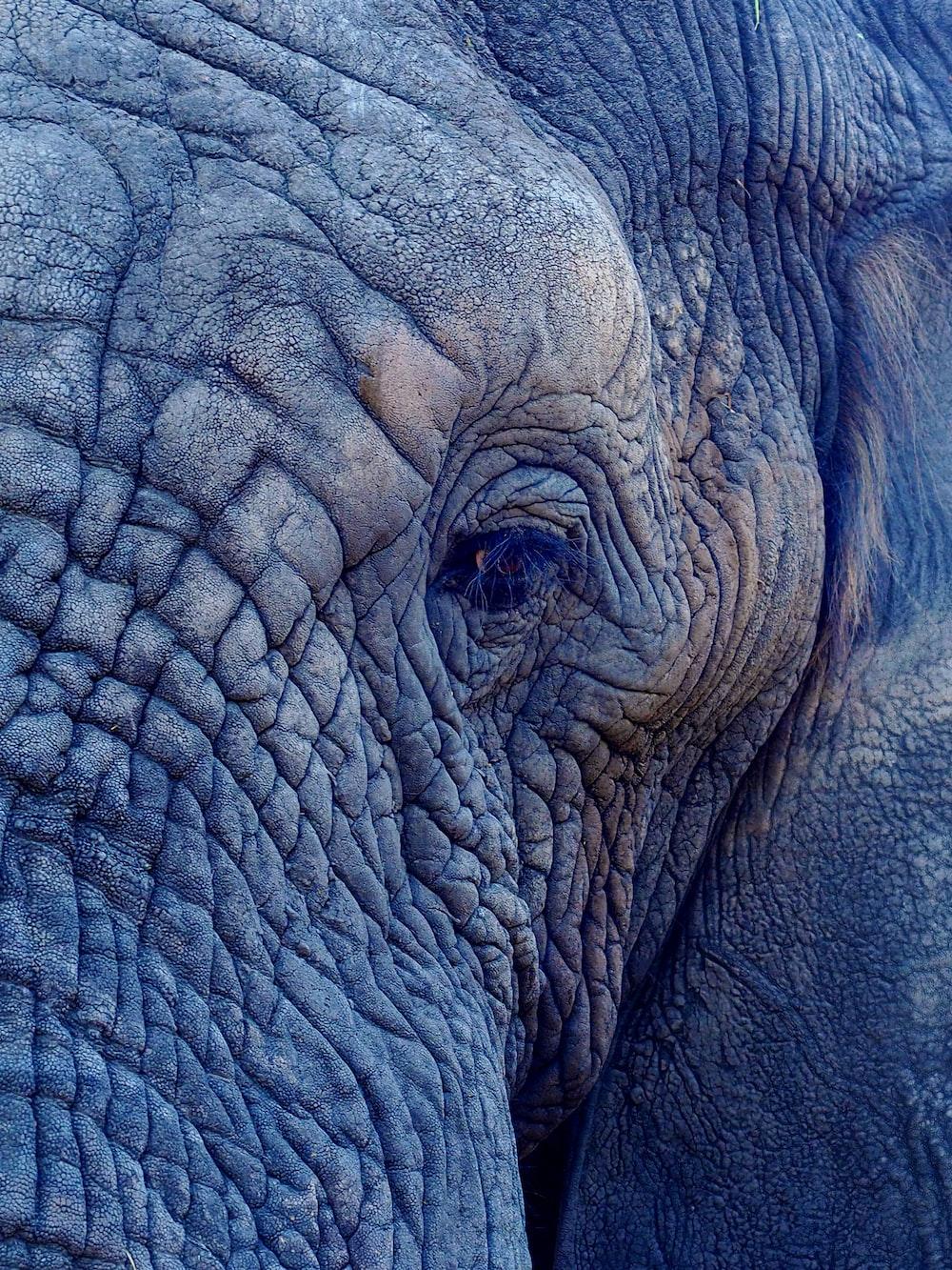 macro photography of elephant's face