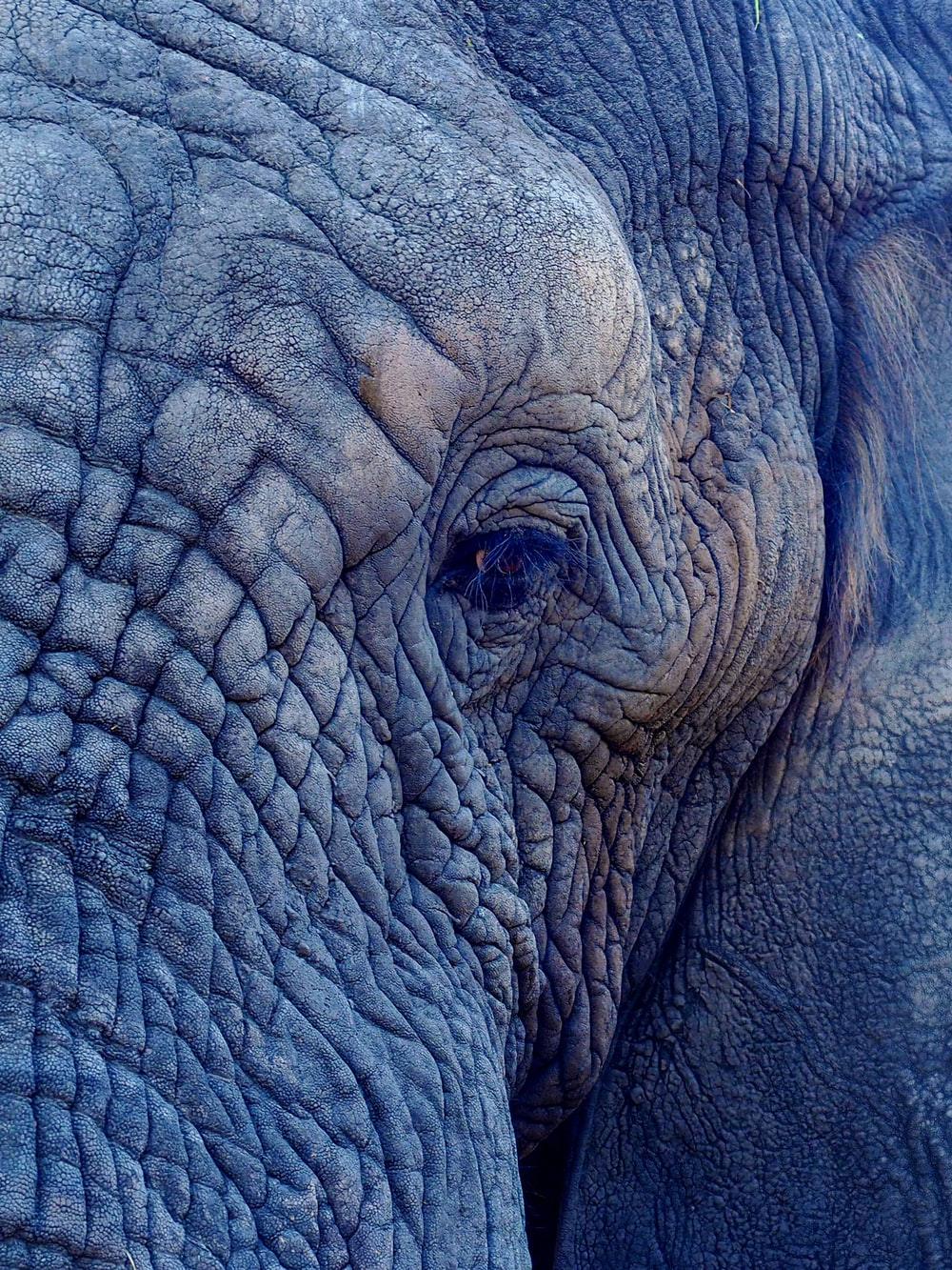 macro photography of elephant's face
