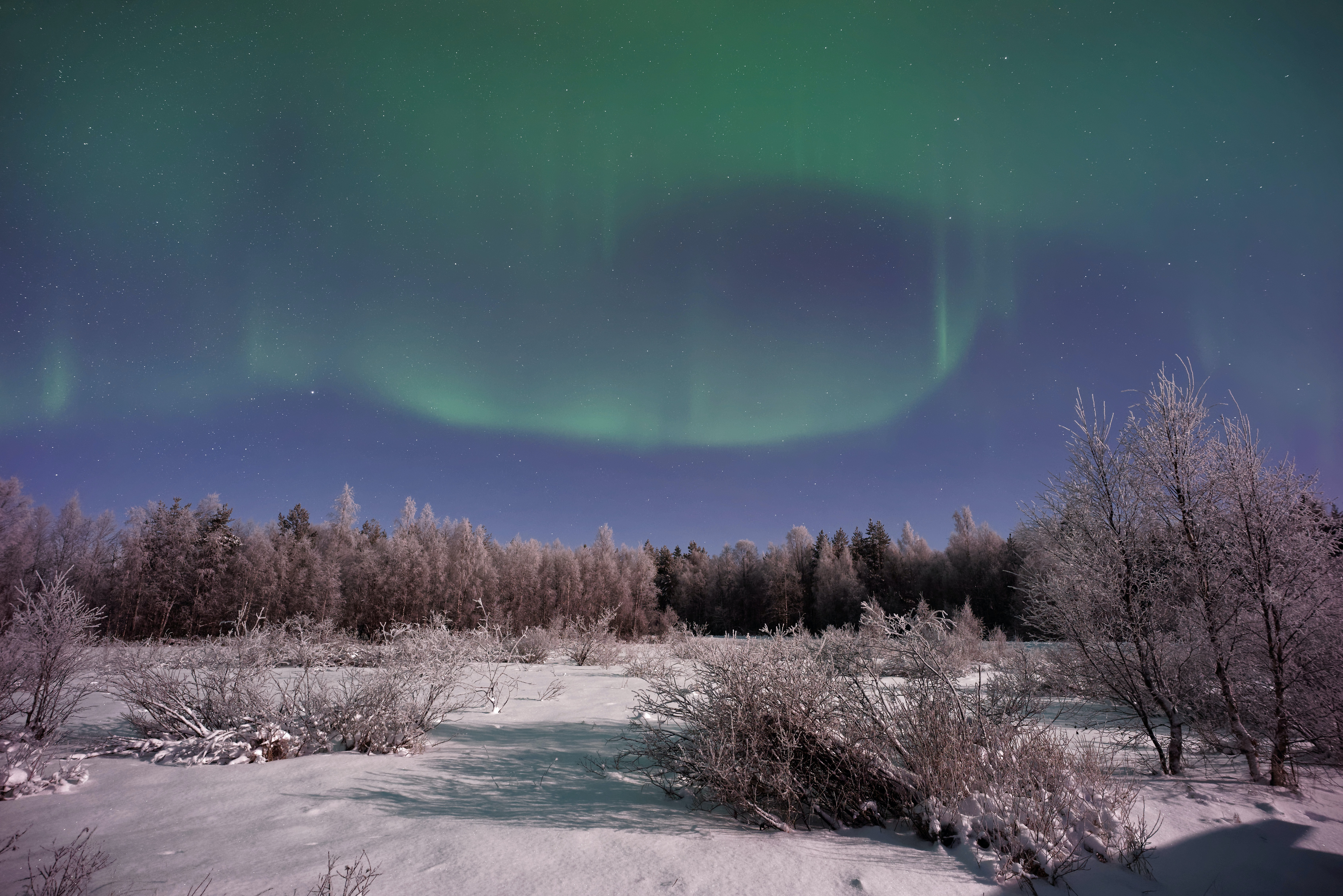 Aurora borealis in the sky over a snowy tree-lined field in Lapland