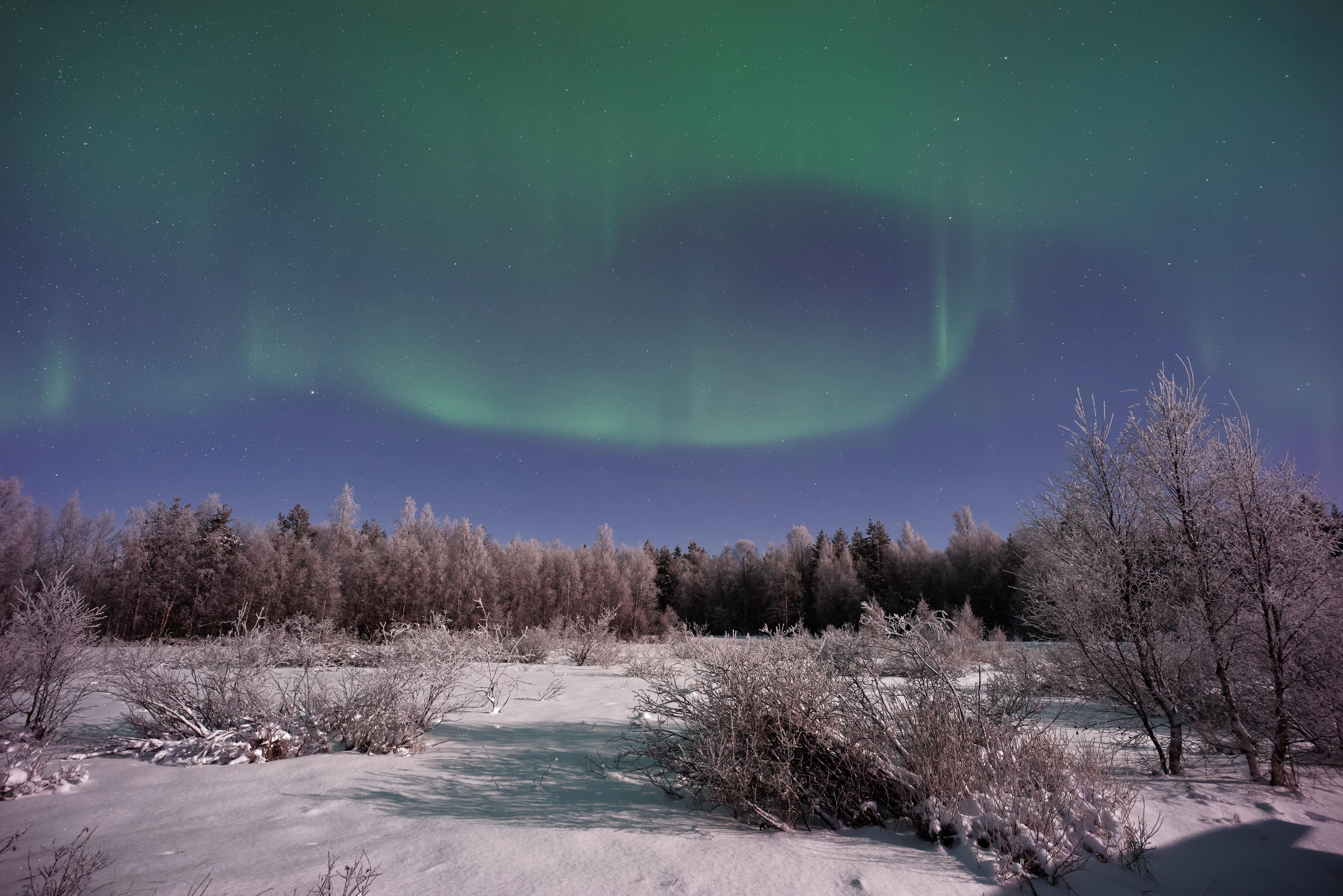 tree covered field under Aurora Borealis