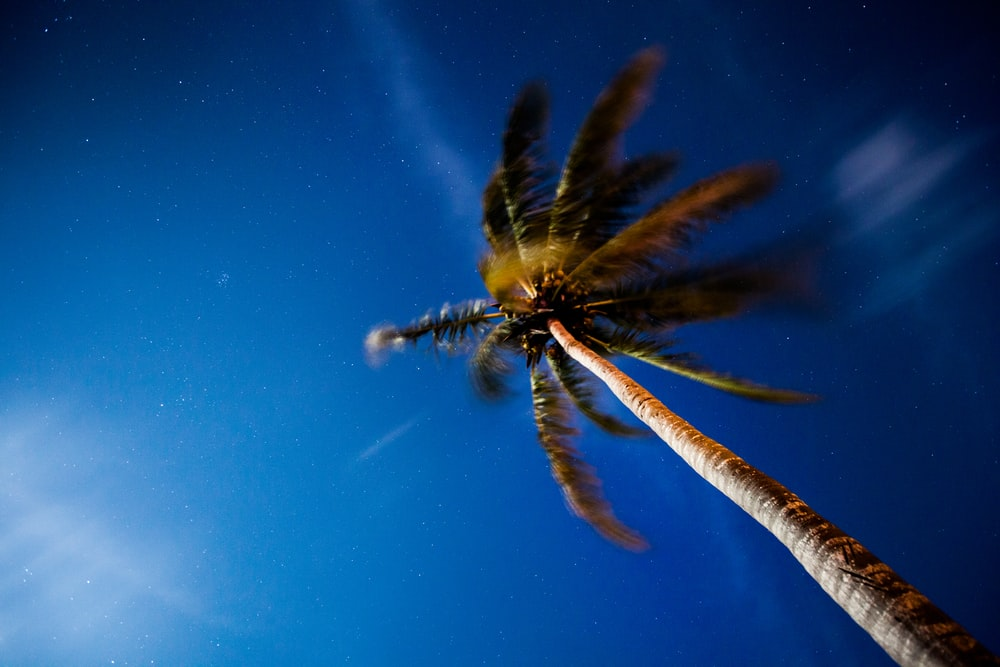 low angle photo of green palm tree