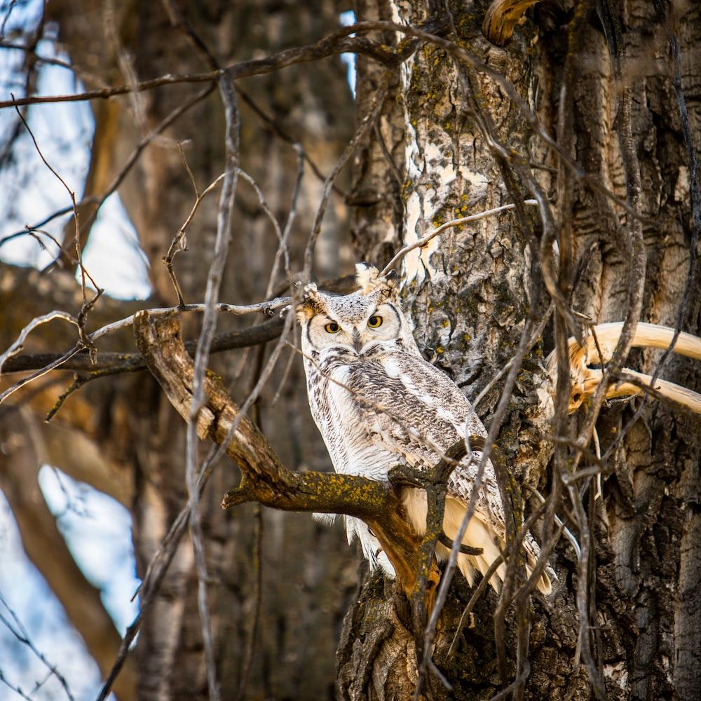 tilt shift lens photography of owl