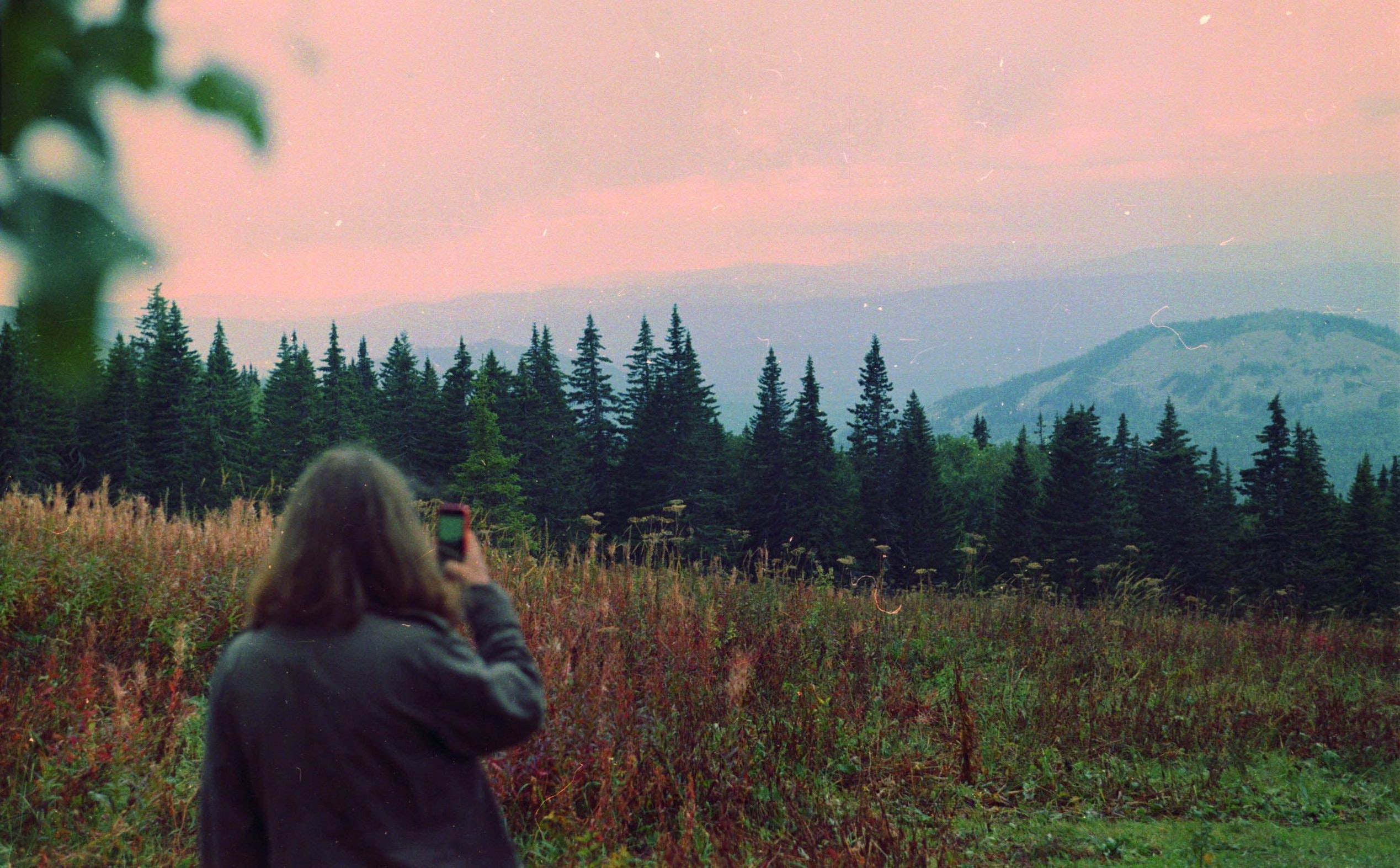 A woman taking a photo of a forest with her phone