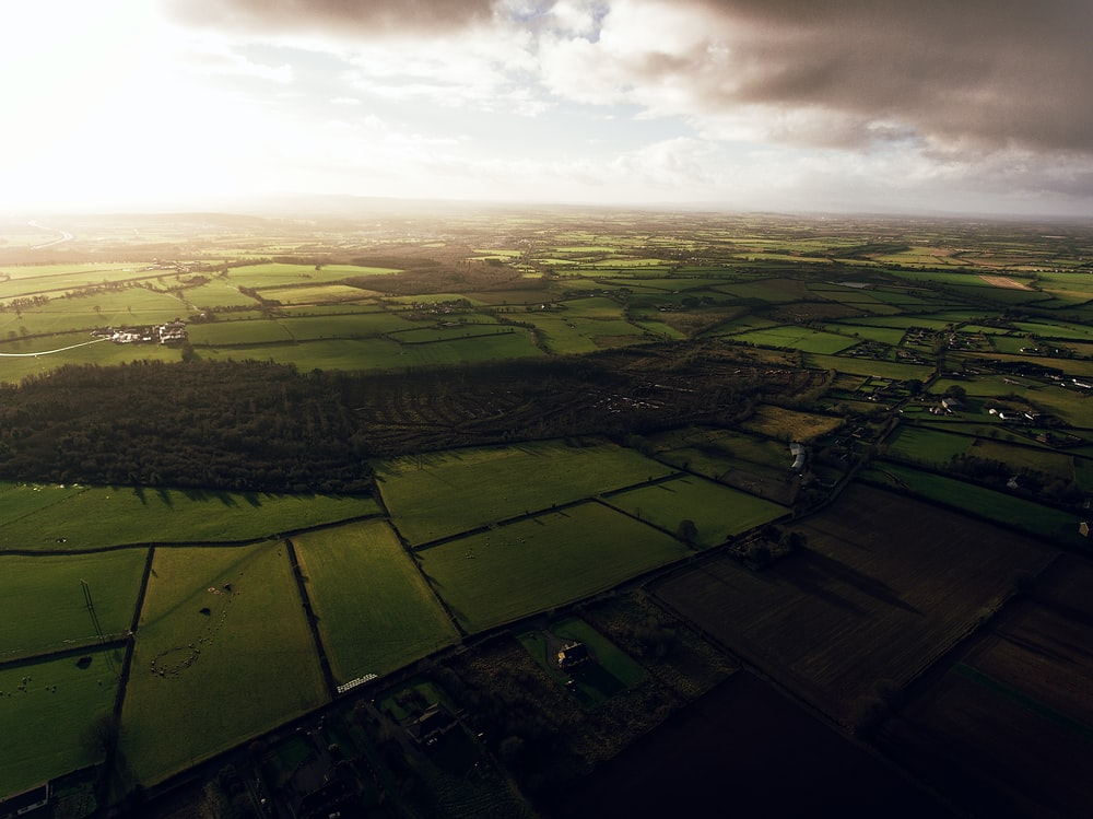 aerial photography of paddies