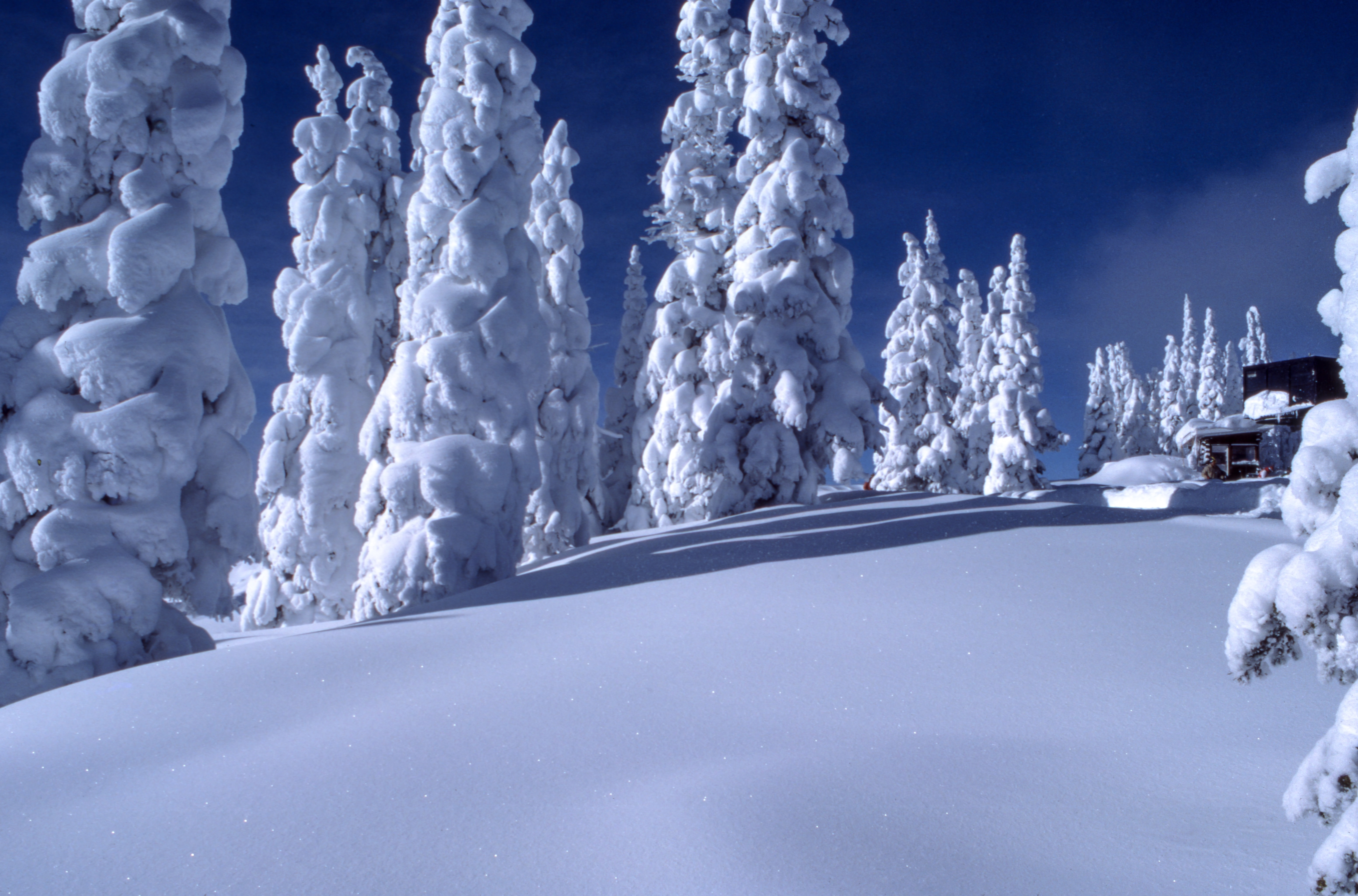 Looking uphill toward a cabin in the forest after a heavy snowfall