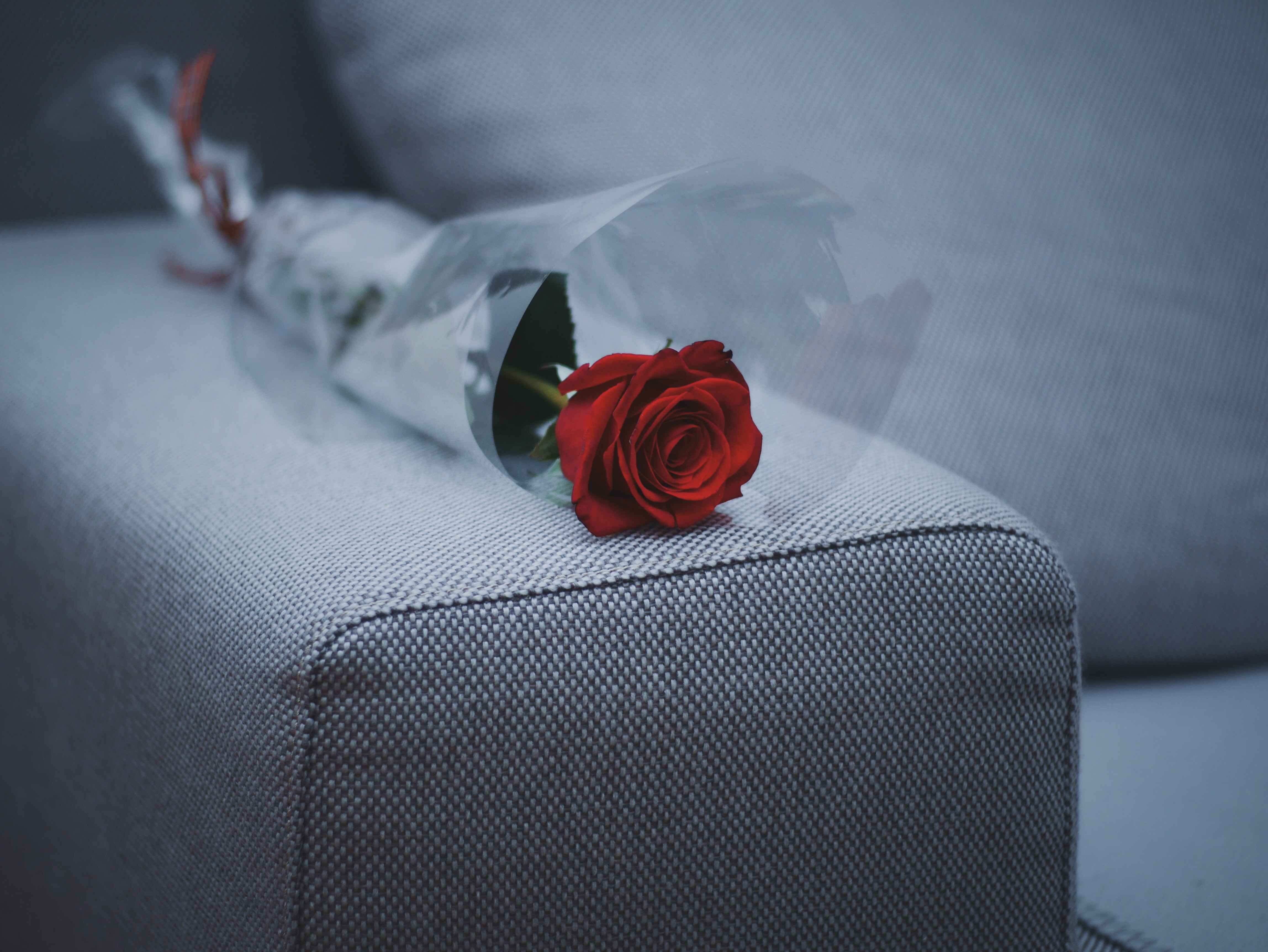 red rose flower on gray fabric sofa