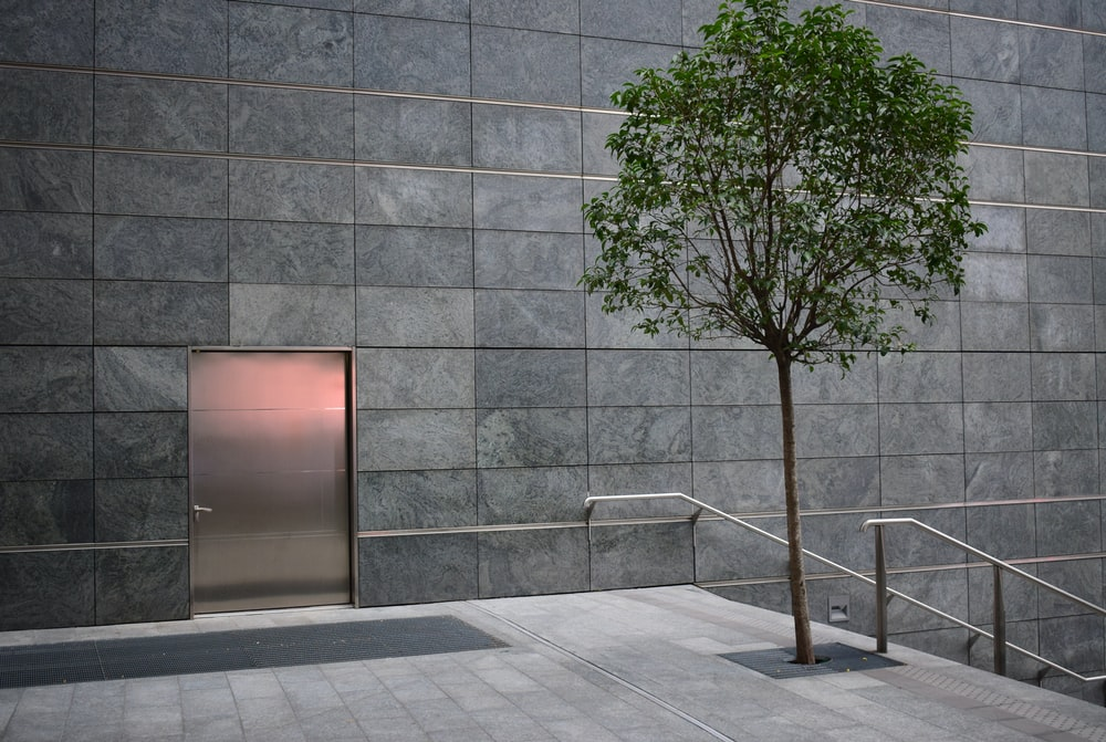 leafed tree near door