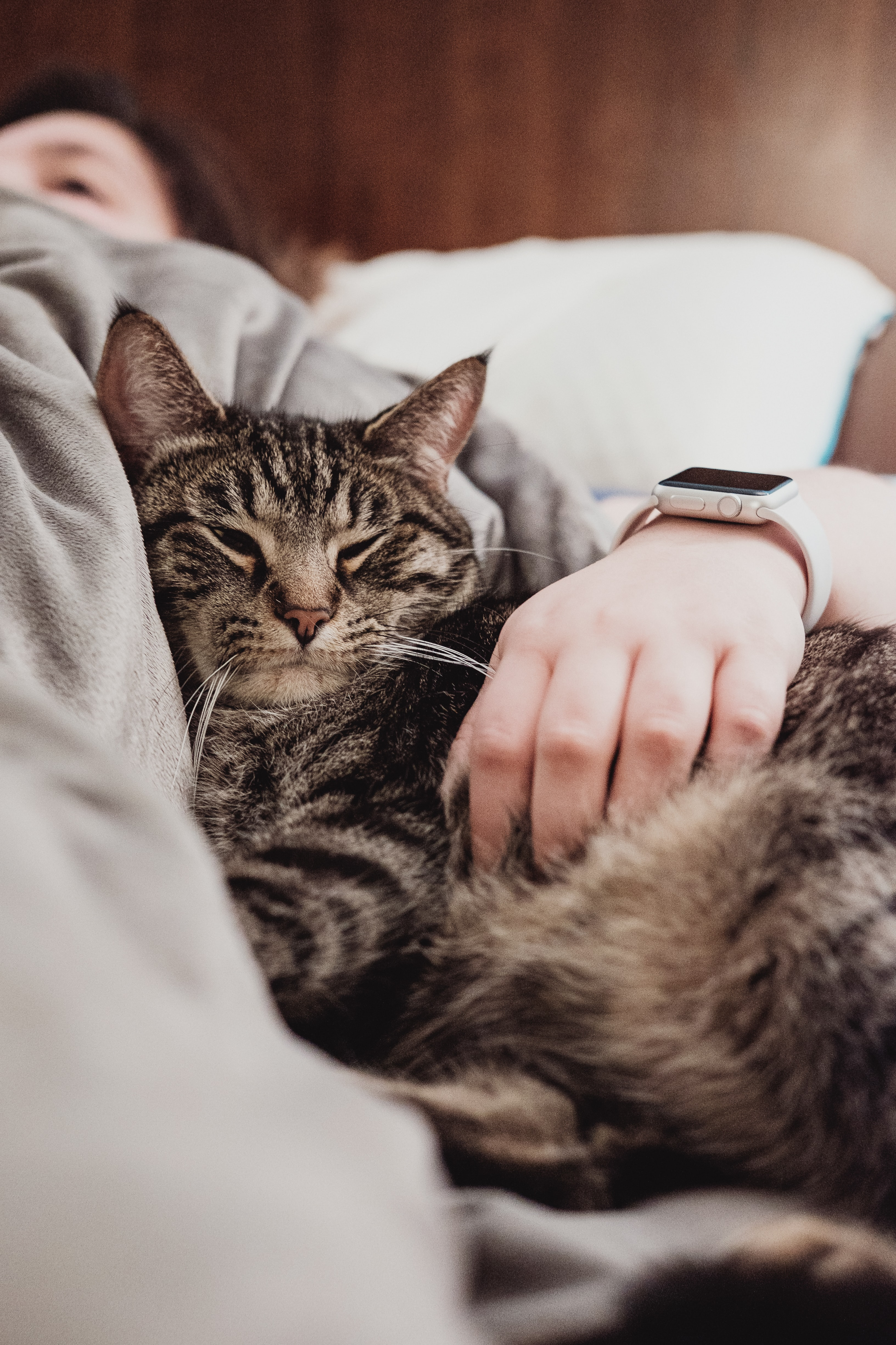 A tabby cat snuggling to a person lying in bed