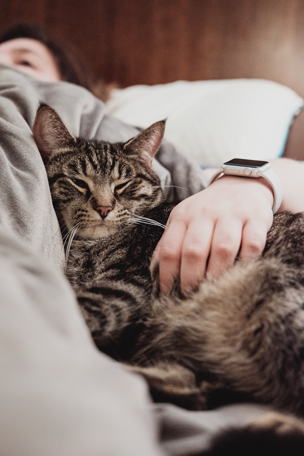 person holding gray tabby cat while lying on bed
