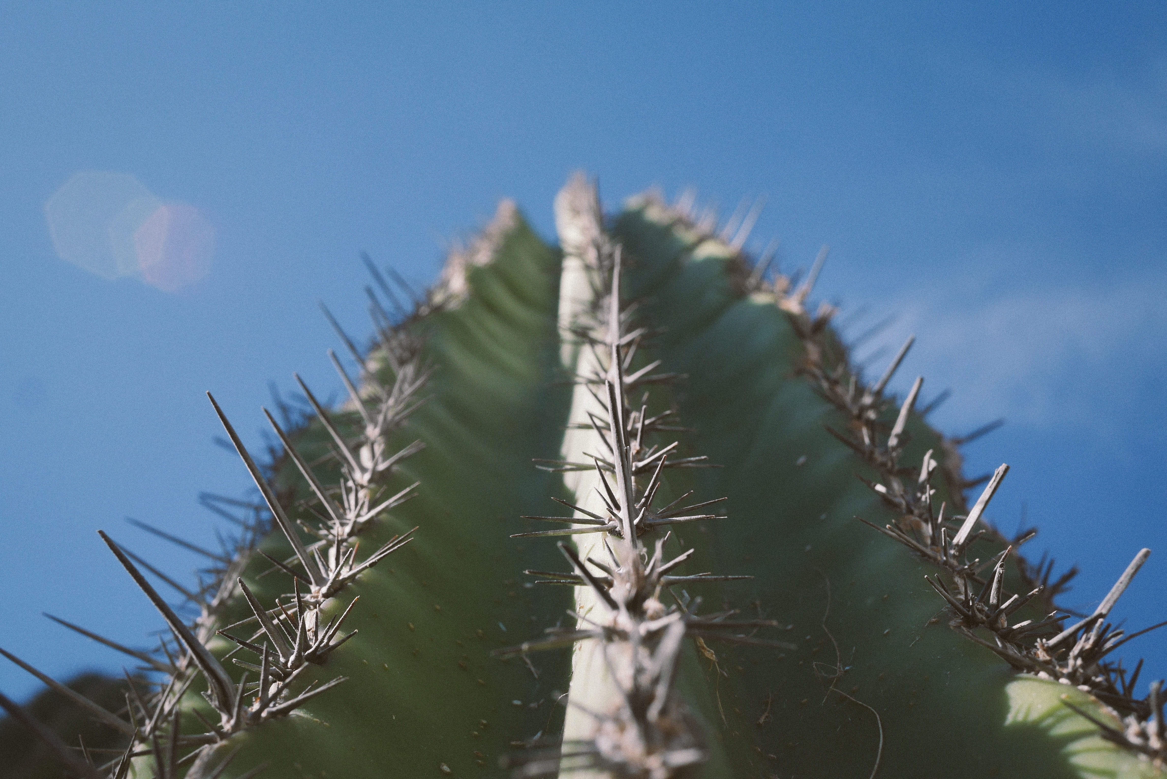 low angle photography of green cactus plant under blue skies at daytime