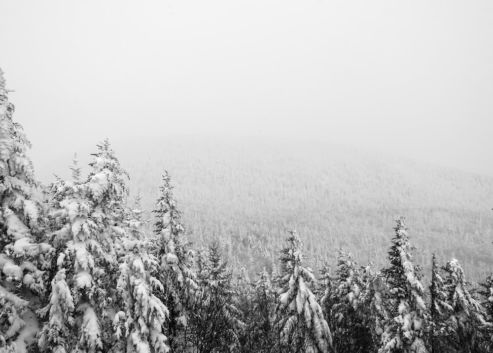 aerial photography of pine tree covered with snow