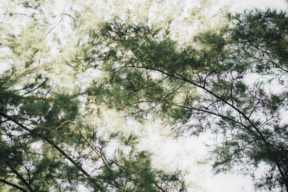 low angle photography of green tree at daytime