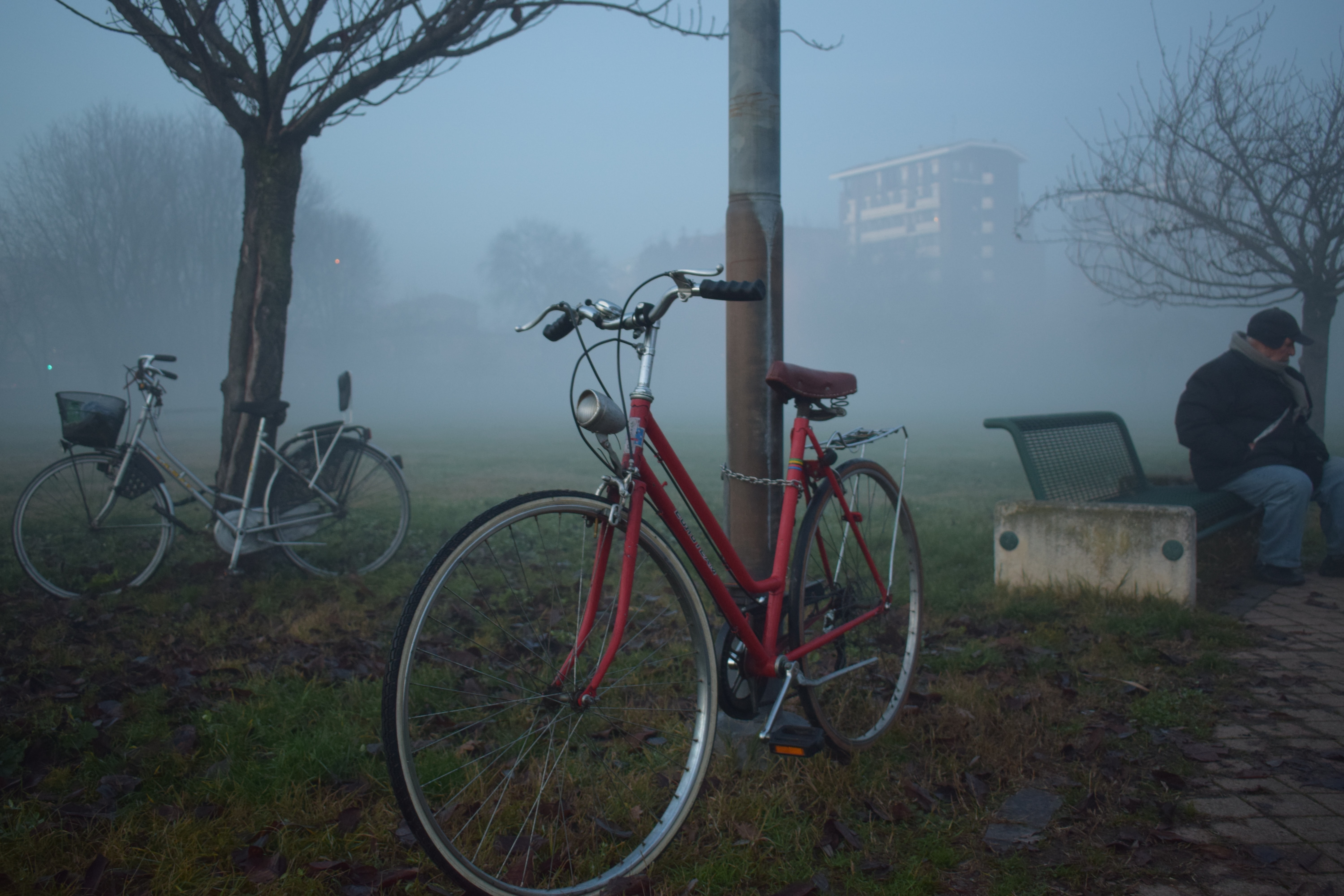 Bicycles parked by a tree, with a person sitting on a park bench.