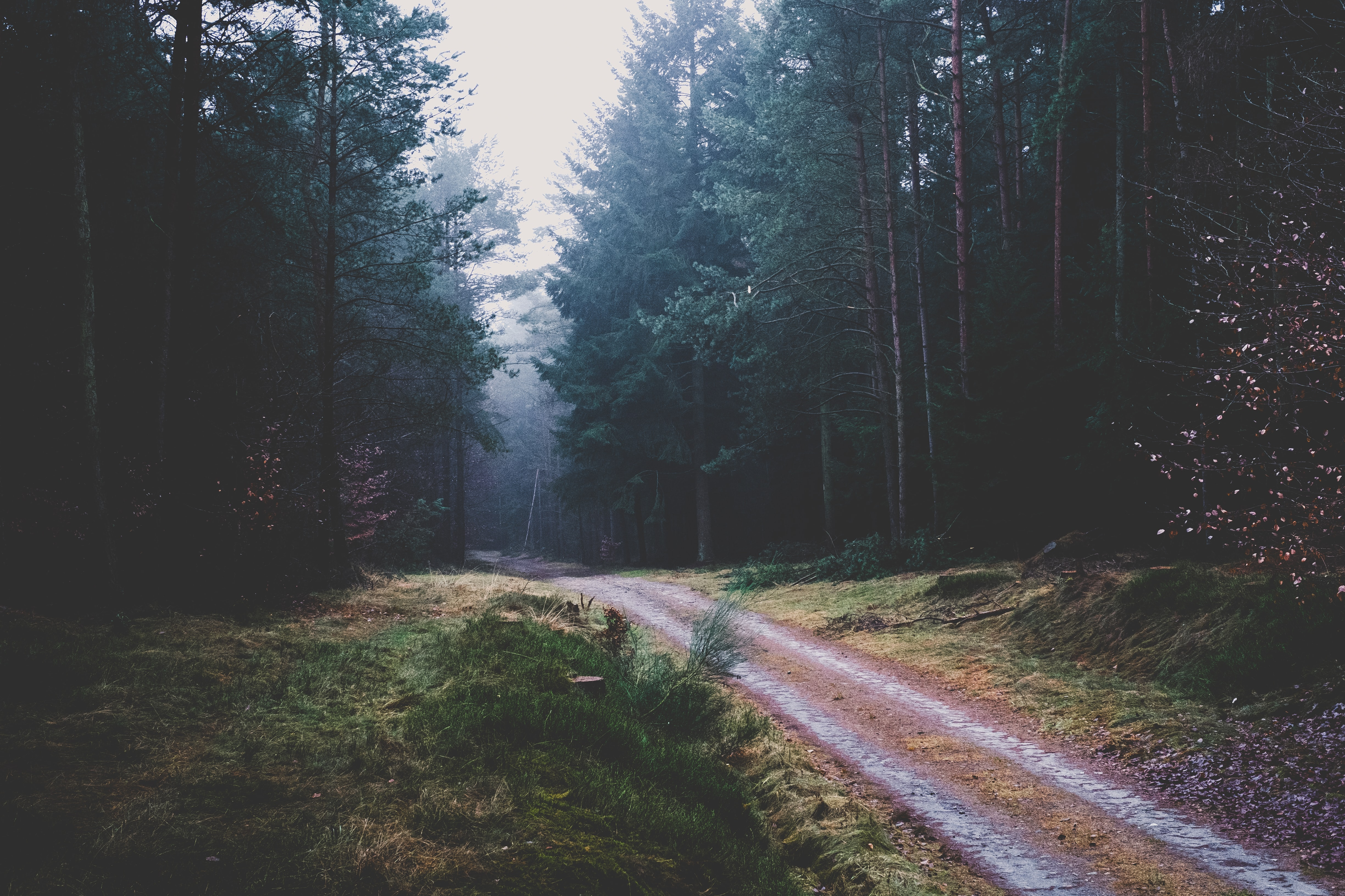 Serene walking path in a wooded forest landscape