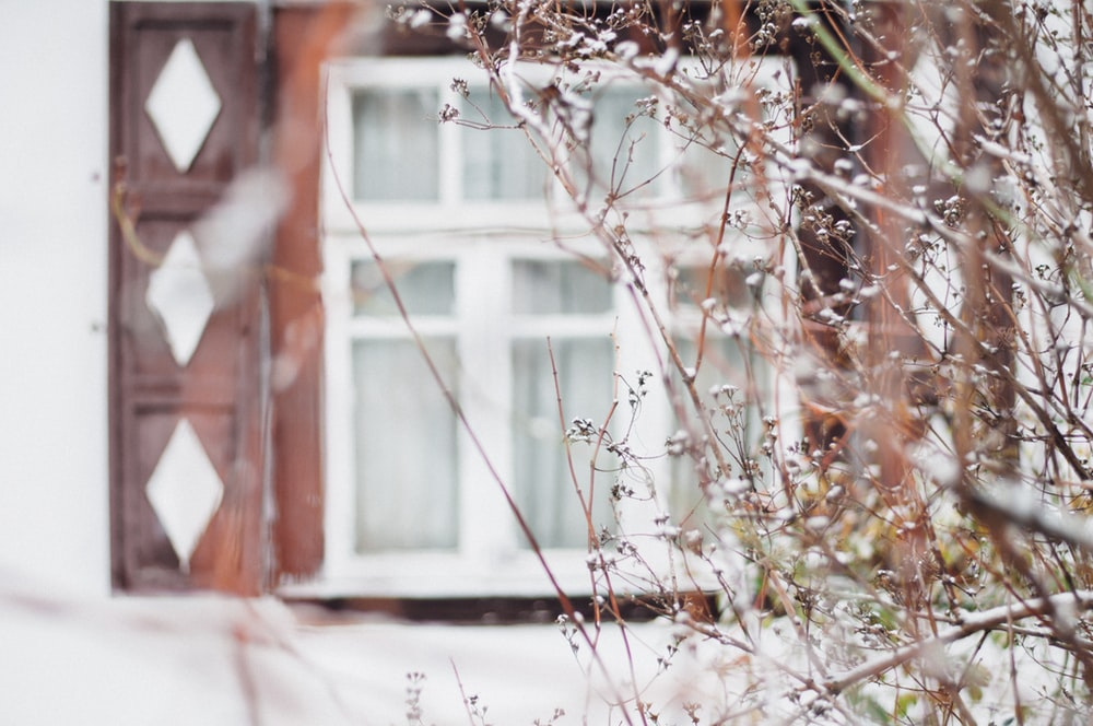 snow covered plant in front of white and brown window