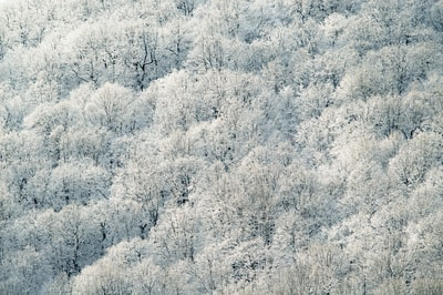 aerial photography of white leafed trees
