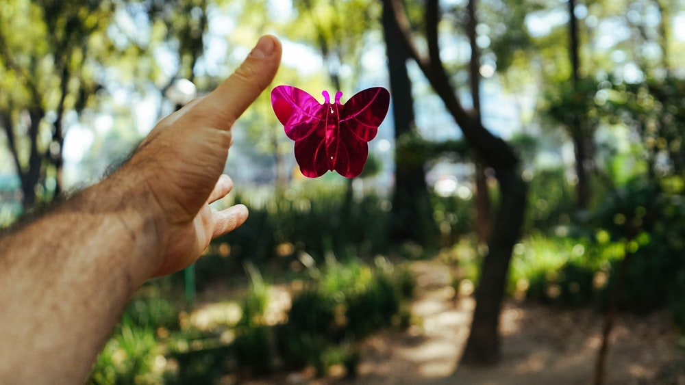 person's hand about to catch a pink butterfly toy at daytime