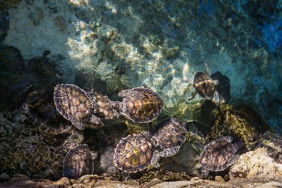 """Turtles on body of water"", Ricard Baraham via unsplash.com"